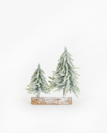 Tronco duo pinheiro